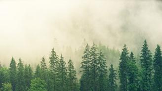 Инвестират в нова техника при залесяването на горите у нас