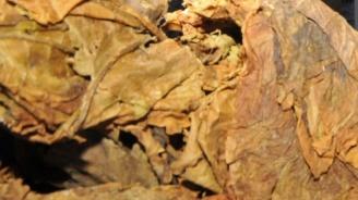Иззеха 106 кг тютюн без бандерол в Лом