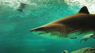 Турски рибари заловиха петметрова акула