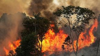 Правителството няма достатъчно ресурси, за да се справи с пожарите в Амазония