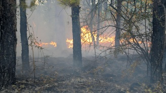 При пожара край Ветрен са унищожени около 400 декара ниска дъбова гора, храсти и пасища