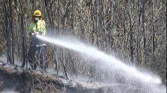 Залесяват изпепелените горски масиви в Измир