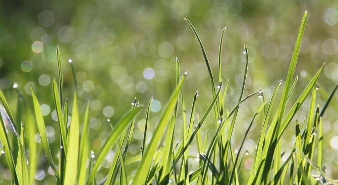 Тревните площи в Кюстендил ще бъдат третирани срещу бълхи. Това