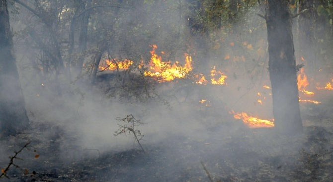 Пожар бушува край град Чанаккале