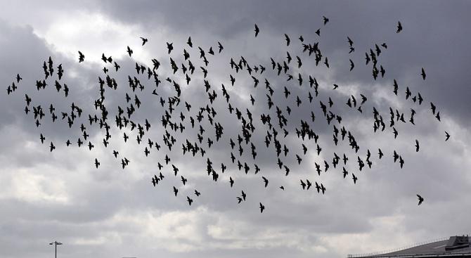 Руски пътнически самолет кацна принудително днес след сблъсък с птици.
