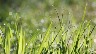 Третират тревните площи в Кюстендил срещу бълхи