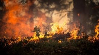 Около 100 дка гора е изгоряла при пожар край Девин