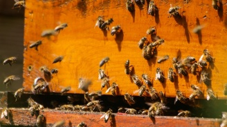 17 пчелни кошера изгоряха при пожар край Велинград