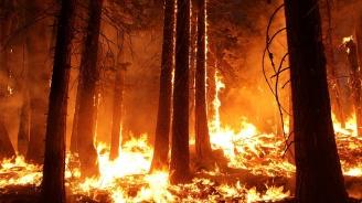 Горски пожар е избухнал в окръг Анталия
