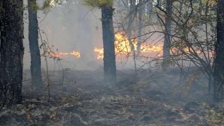Овладян е пожарът между селата Сокол, Еленово и Радево