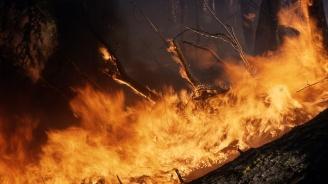 Пожар край Клокотница застрашава борова гора