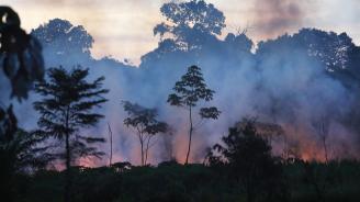 """В Амазония фермерът Аурелио Андраде сече гори, """"за да оцелее"""""""