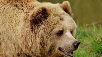15 сигнала за щети от мечки са проверили експерти от РИОСВ-Смолян през август