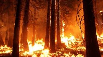 40 деца са евакуирани заради голям пожар в Стара Загора