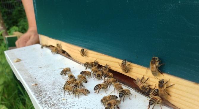 Пчелин със 120 кошера е изгорял при пожар