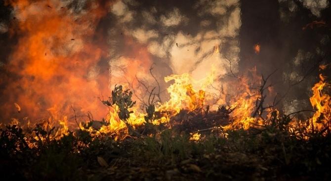 Пожар избухна в гората край яз. Брягово