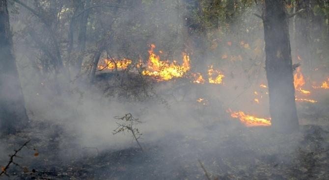 Пожар гори между село Брягово и село Искра