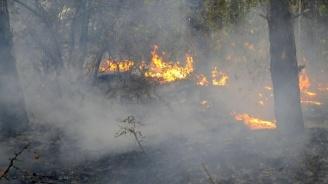 """Овладян е пожарът в иглолистната гора над язовир """"Ястребино"""" край село Любичево"""