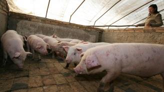 Комисията по земеделие в ЕП одобри предложението на Иво Христов за допълнителни 70 милиона евро от ЕС за борба с АЧС