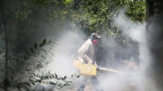 Германия забранява препарат, убиващ пчели