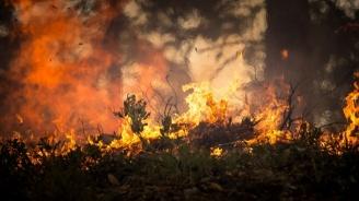Стотици евакуирани заради голям горски пожар в Калифорния