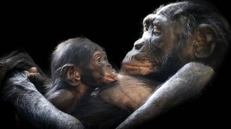 Женските горили вземат предпазни мерки срещу кожни болести