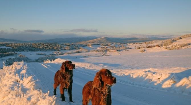 Мистериозна болест убива кучета в Норвегия