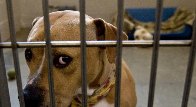 Изгладняло куче изяде част от крака на починалия си стопанин