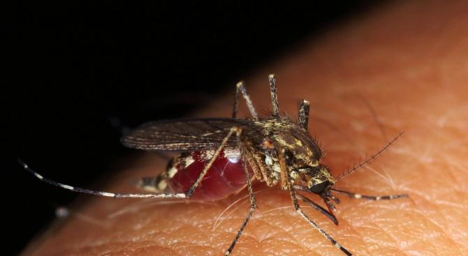 Регистрираха първи случай на западнонилска треска в Пазарджик