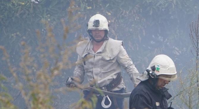 Горски пожар гори на тежък терен край язовир Батак