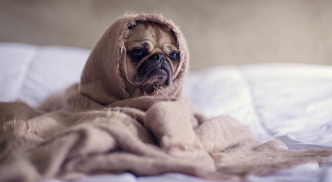 Кучетата обичат да се гушкат през нощта и стопаните им