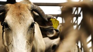 Незаконен превоз на животни установиха полицаи край Кърджали