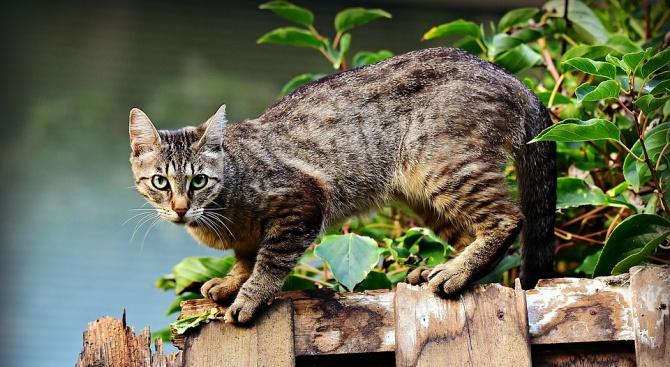 Труп на котка върху гроб хвърли в паника Казанлък