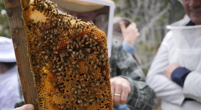 Пчелари от пет страни от Черноморския регион обсъждат възможностите за