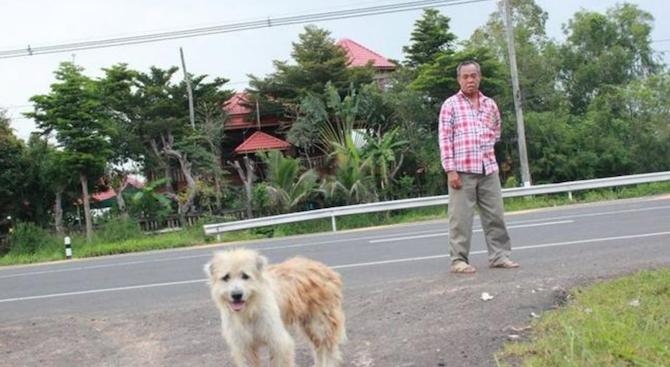 История за забравено край пътя куче трогна цял Тайланд, когато