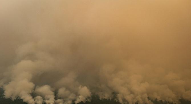 Голям пожар във Варна. Запали се боровата гора над квартал