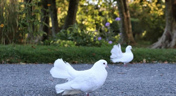 На 20 септември светът ще отбележи Международния ден на мира