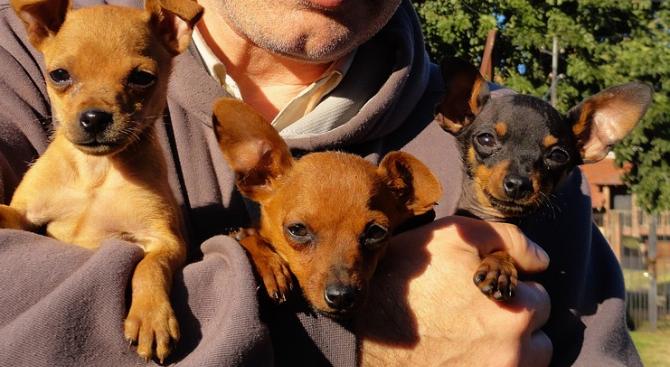 Хванаха 52-годишен крадец на кучета. Това съобщиха от ОДМВР-Търговище. На