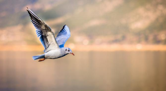 Популацията на птиците в Северна Америка е намаляла с една