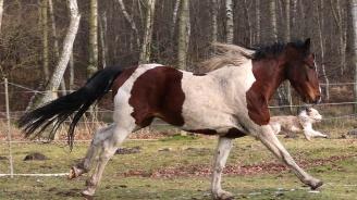 Само за 24 часа: Убиха кон и куче във Видинско