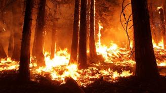 Индонезия арестува 185 души заради горските пожари