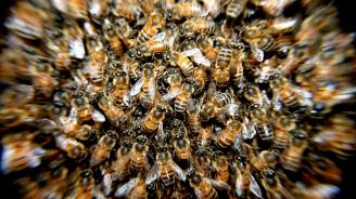 Рояк пчели пречи на самолет да излети, напада персонала