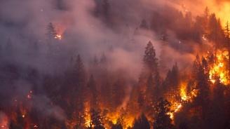 Пожар бушува в гората край Велинград