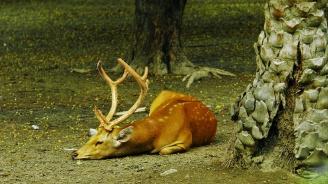 Намериха труп на благороден елен в землището на село Кръвеник