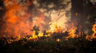 Пожар в землището на село Стакевци