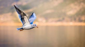 Броят на птиците рязко намалява в САЩ и Канада
