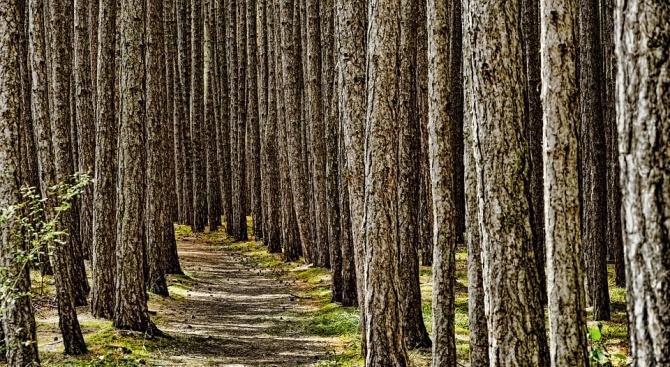 Мълчалив убиец с размери едва няколко милиметра опустошава германските гори