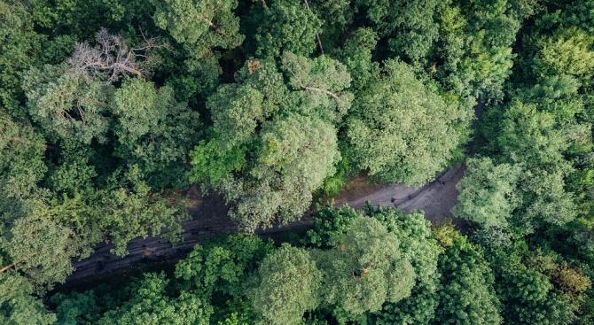 Международният съюз за защита на природата предупреди, че над 40