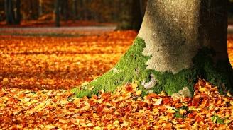 Настъпи астрономическата есен