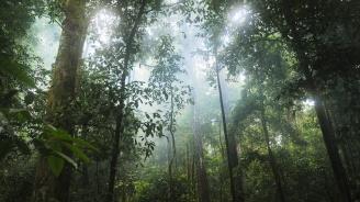 Отпускат още 500 млн. долара за опазване на тропическите гори